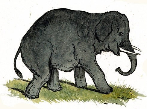 Gray_Elephant_Drawing