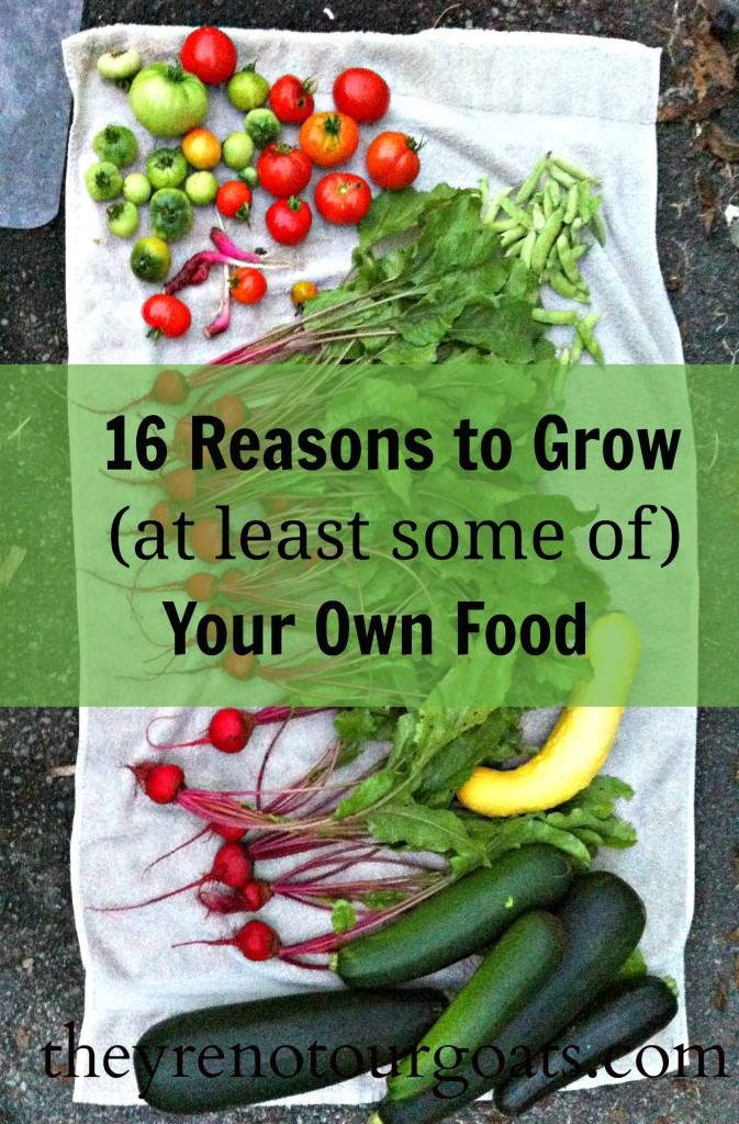 16 Reasons to Grow Your Own Food