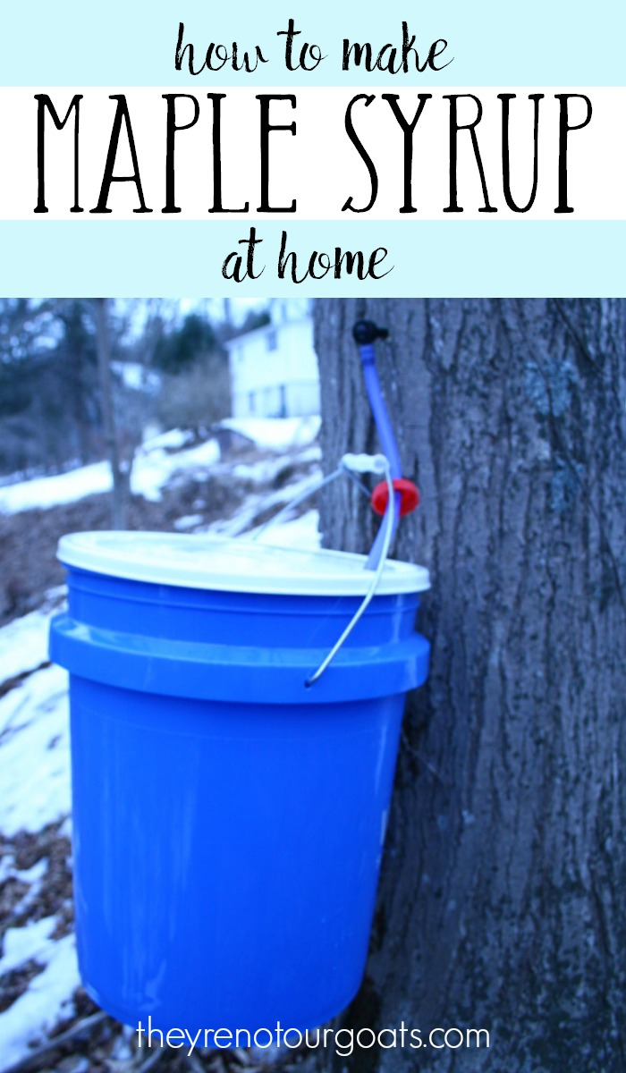 Making Maple Syrup: Tapping, Processing