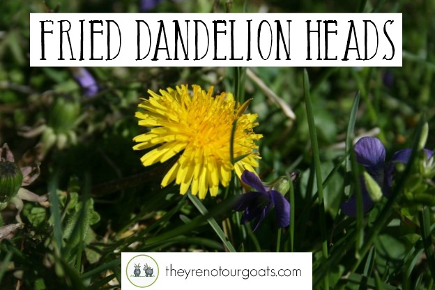 Fried Dandelions Feature