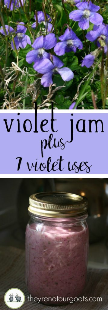 How to make pretty purple violet jam- plus a round up of other violet uses!