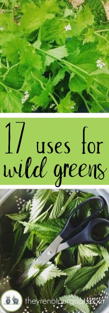 How to get started using wild greens in your kitchen and your home.