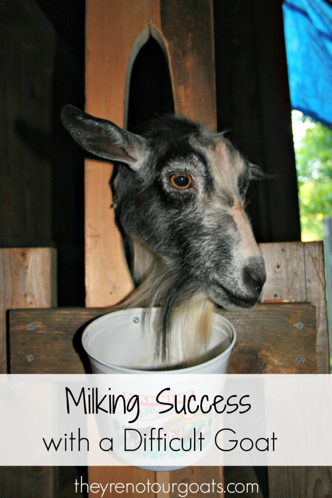 Milking Success with a Difficult Goat