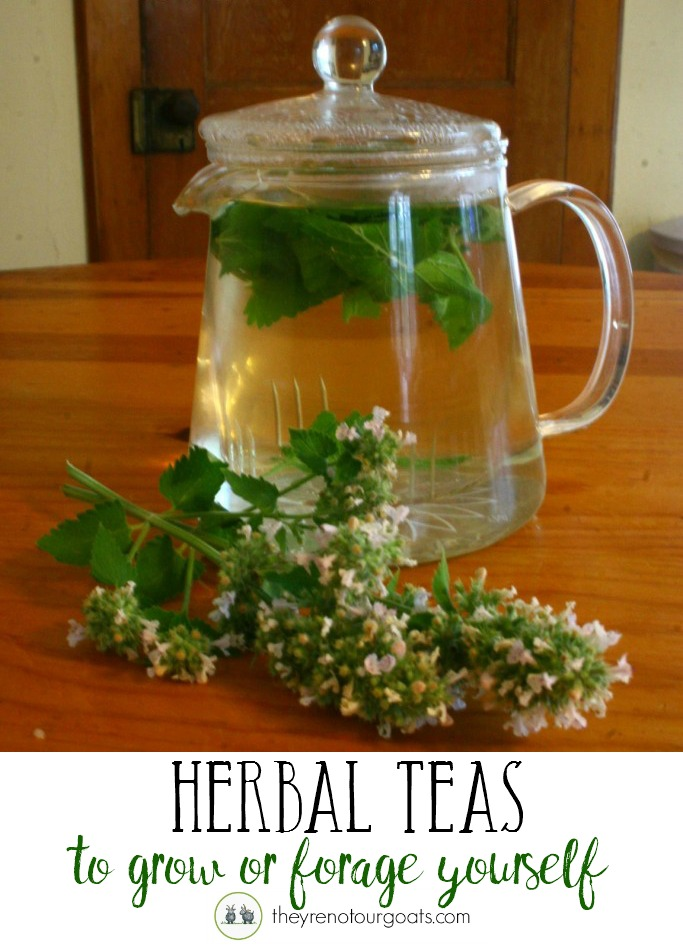 Delicious herbal teas that you can grow or forage!