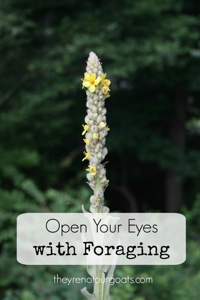 Open Your Eyes with Foraging