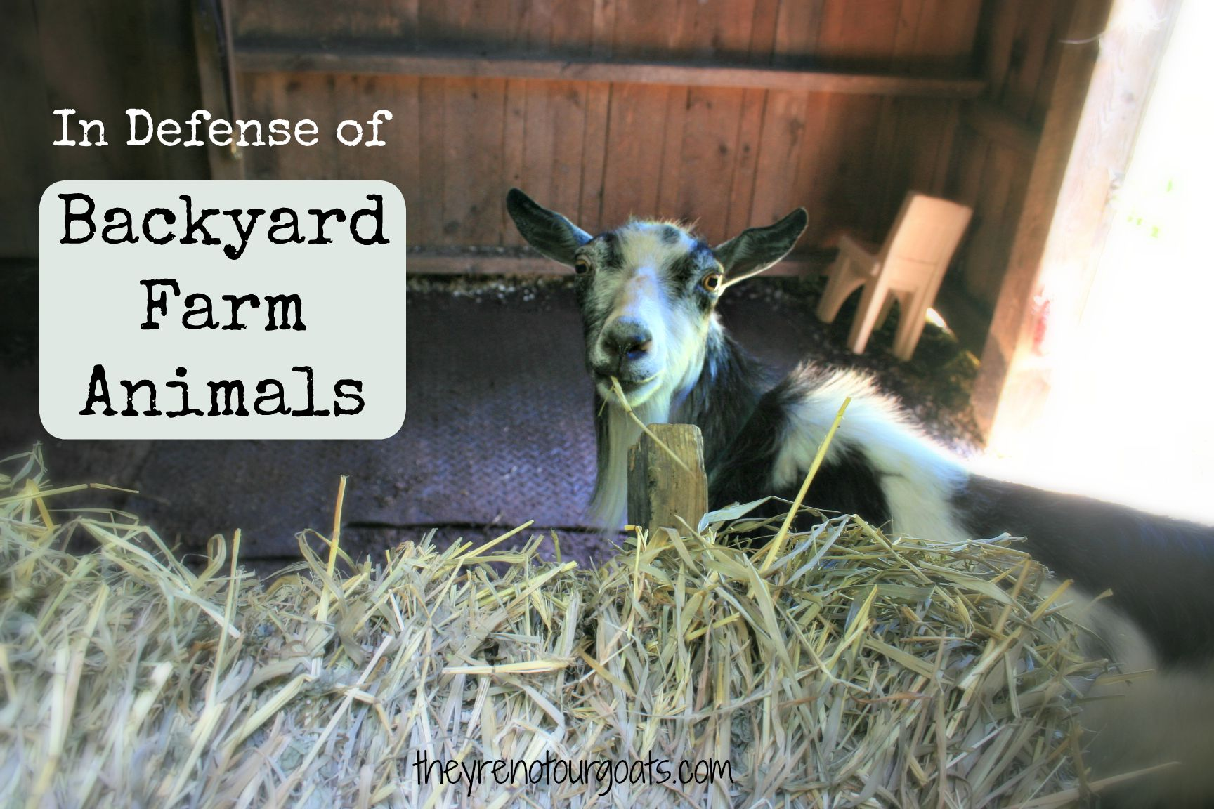 Backyard Farming Animals : In Defense of Backyard Farm Animals  They?re Not Our Goats