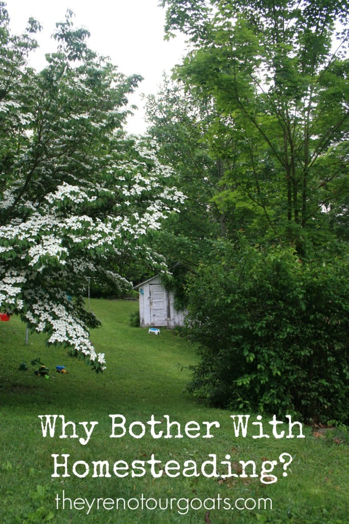 Why-Bother-With-Homesteading-