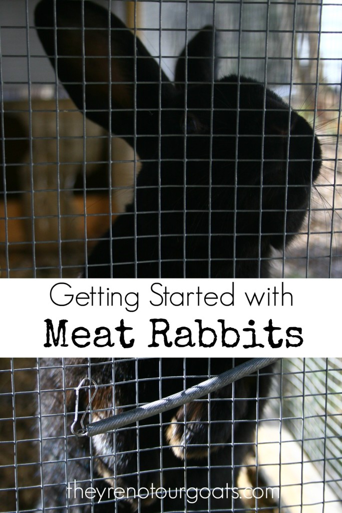 Getting Started with Meat Rabbits