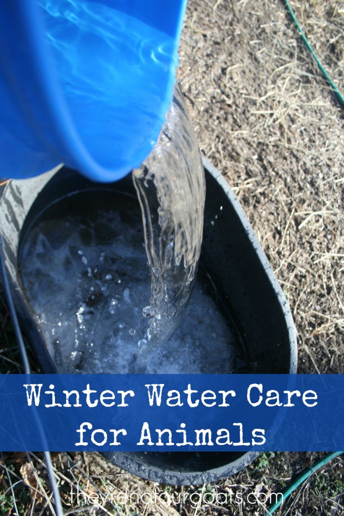 Winter Water Care for Animals
