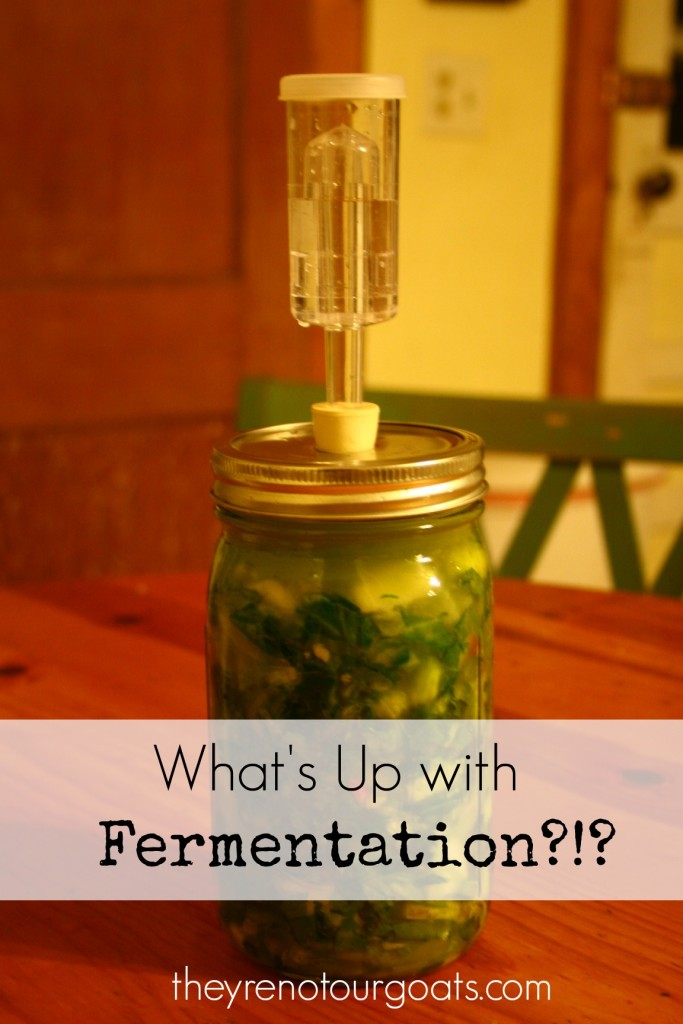 What's Up with Fermentation