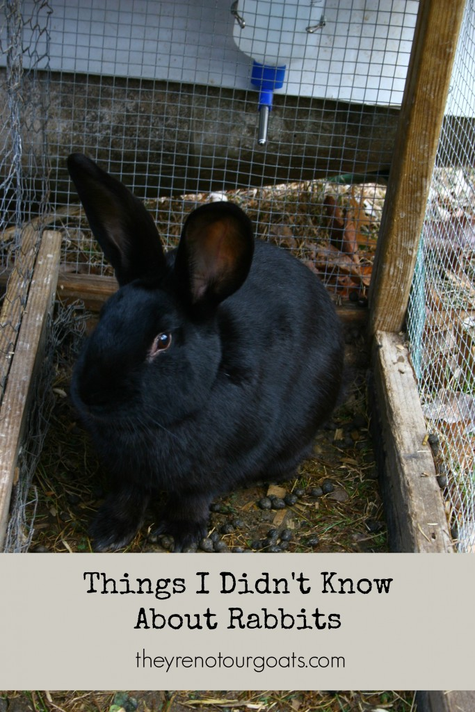 The things I didn't know about keeping rabbits