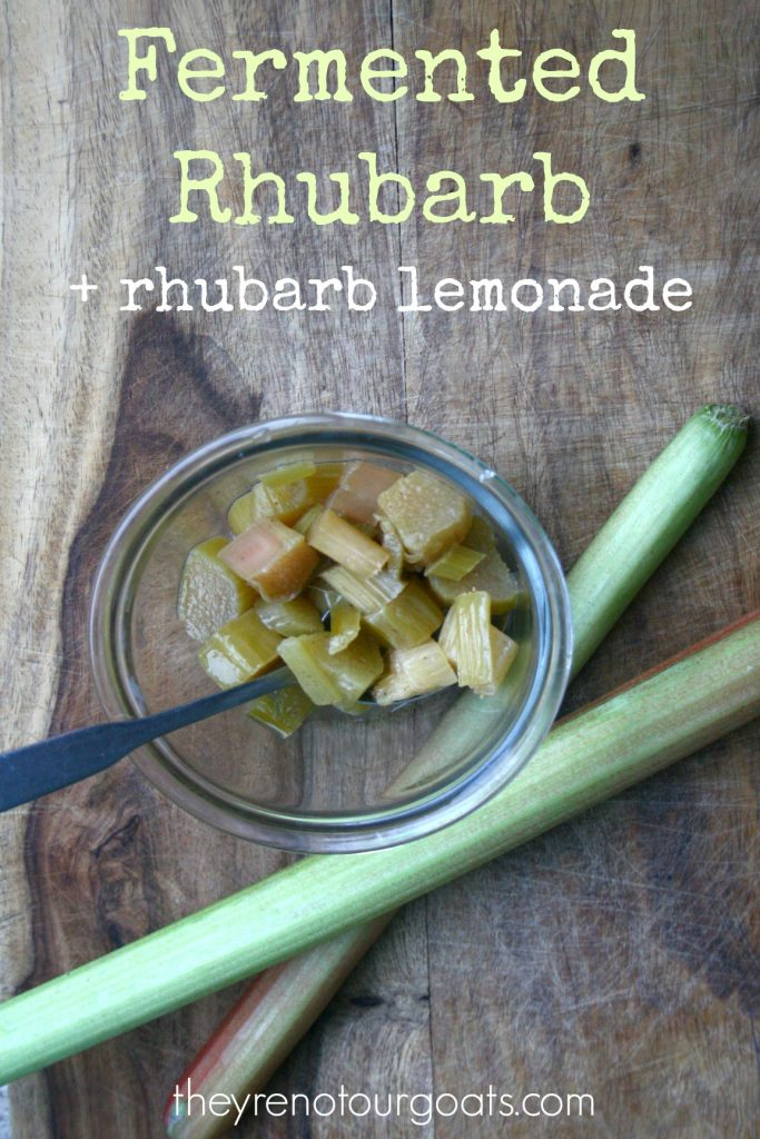 Fermented rhubarb is easy, healthy, and tasty too. Not convinced? Try this easy fermented rhubarb lemonade recipe!