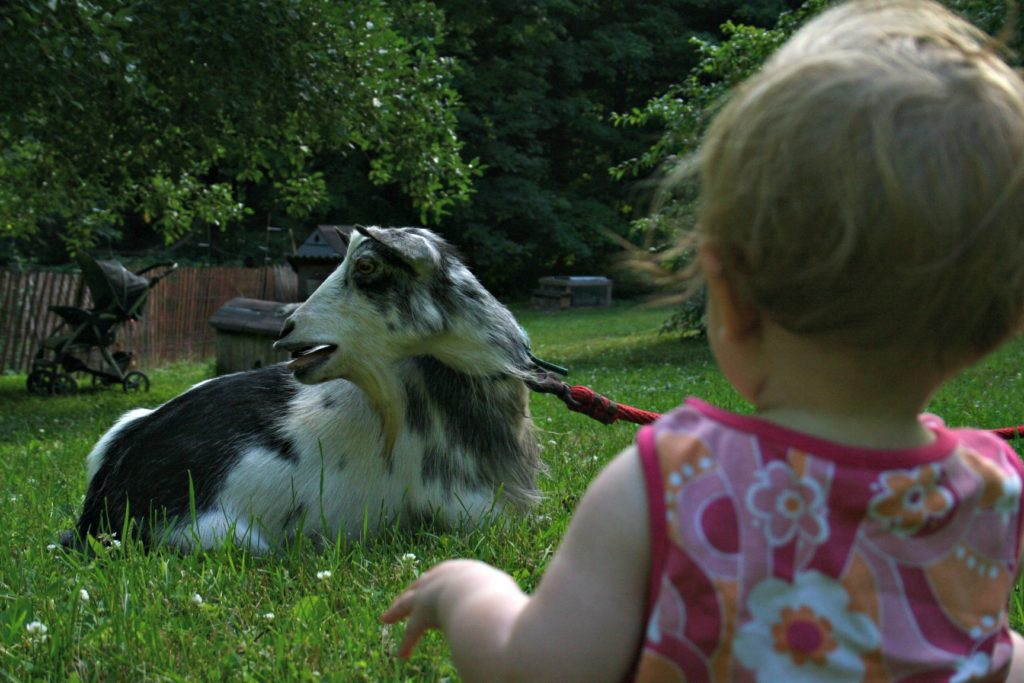 A girl and her goat.