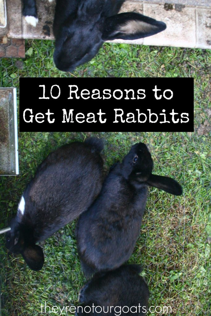 10 Reasons to Get Meat Rabbits