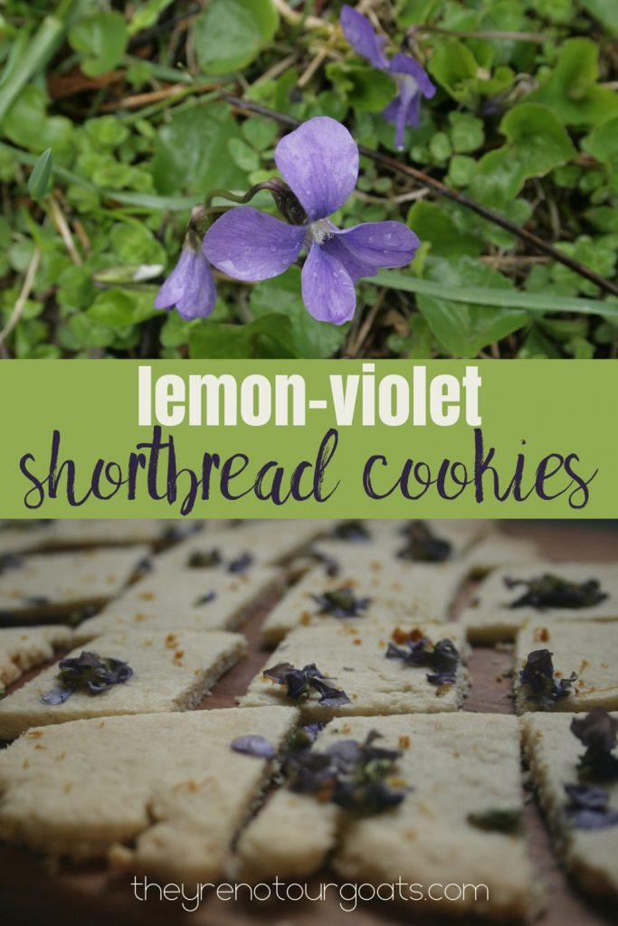 How to Make Lemon Violet Shortbread Cookies.