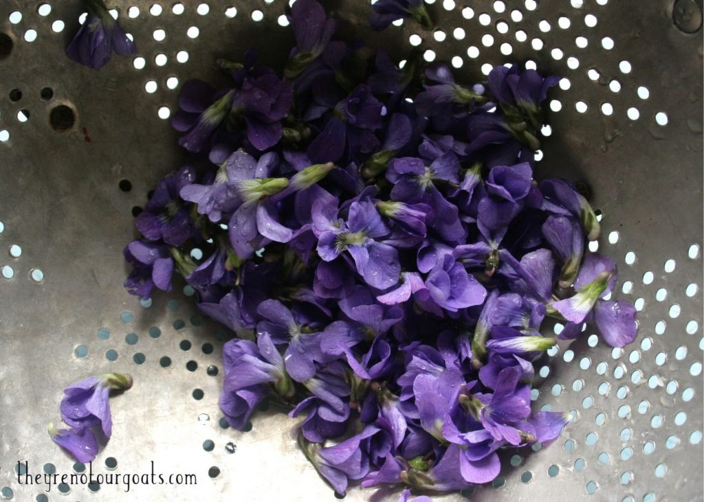 Purple violet flowers that have been washed and sitting in a colander.